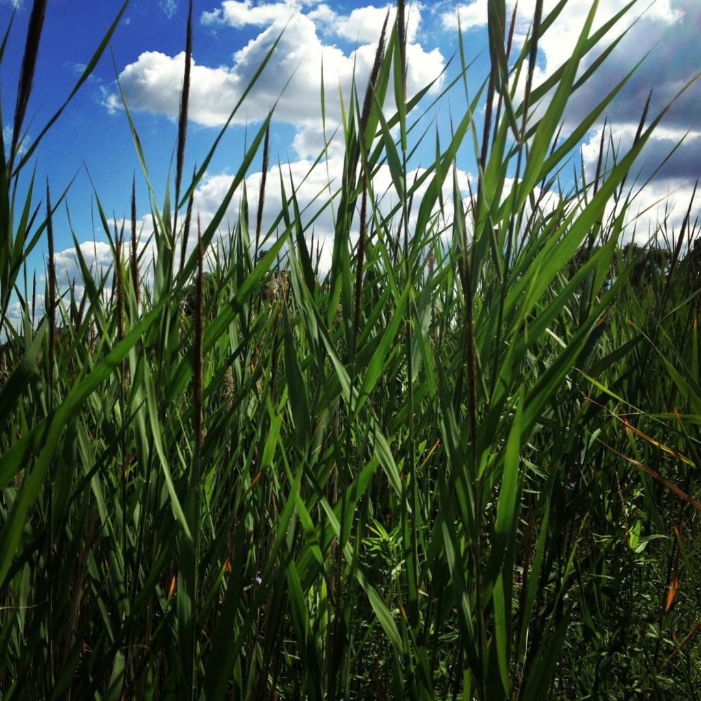 2166e-tallgrass